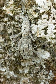 Mante religieuse sur le rocher dans la forêt tropicale.