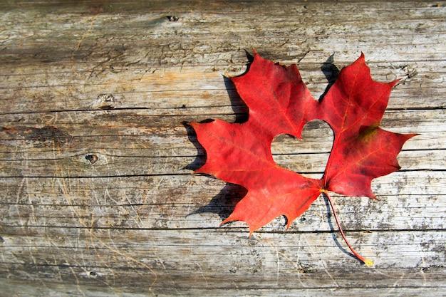 Maple-leaf pour couper le coeur