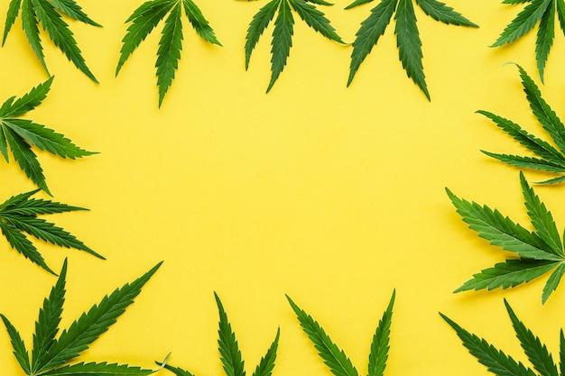 Maquette de cadre de feuille de cannabis. feuilles de chanvre vertes sur fond jaune de couleur. plante de marijuana médicale. cannabis sativa. légaliser les mauvaises herbes. espace de copie.