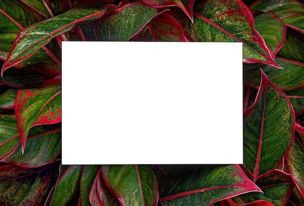 Maquette de carte d'invitation blanche sur fond de feuilles