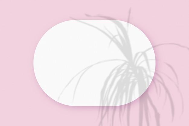 Maquette avec des ombres végétales superposées sur une feuille ovale de papier blanc texturé sur un fond de table rose. orientation horizontale.