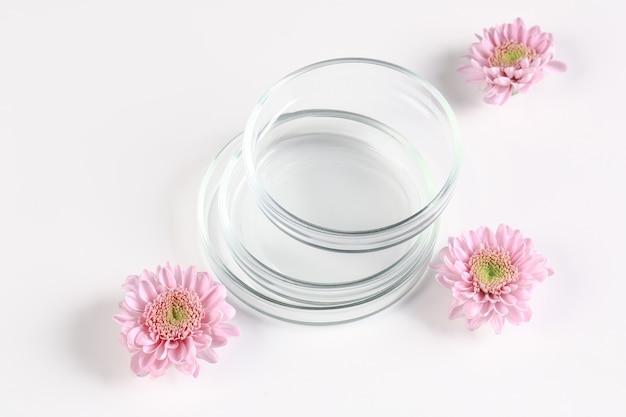 Maquette pour les cosmétiques biologiques ou la médecine alternative. boîtes de pétri aux chrysanthèmes roses sur fond blanc.