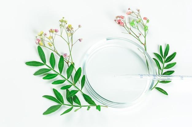Maquette pour les cosmétiques biologiques ou la médecine alternative. boîtes de pétri avec feuilles vertes et pipette