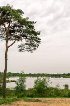 Marais d'arbres et de lacs