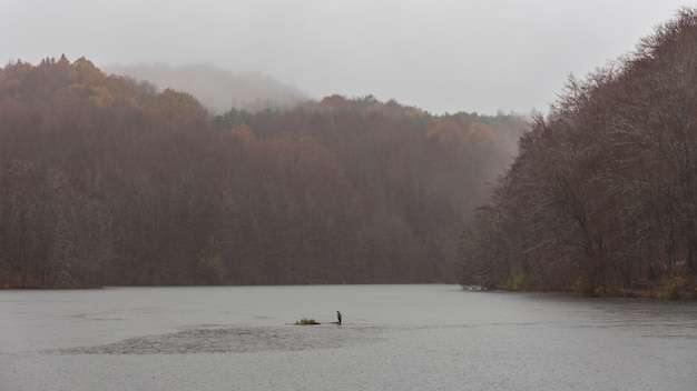 Marais de santa fe en un jour de pluie avec un grand cormoran au milieu