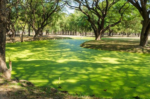 Marais vert