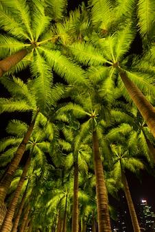 Marcher chemin avec des cocotiers à côté des parcs et en plein air de la marina bay singapour
