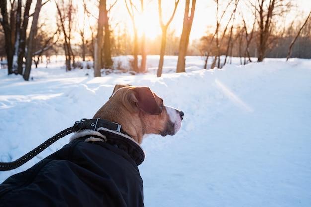 Marcher avec un chien dans une parka chaude par une froide journée d'hiver. chien en laisse dans un parc, vue rapprochée