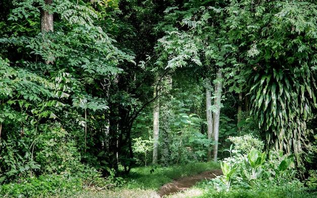 Marcher jusqu'à la jungle forestière en asiatique
