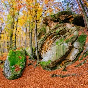 Marcher en terrain rocheux dans la forêt