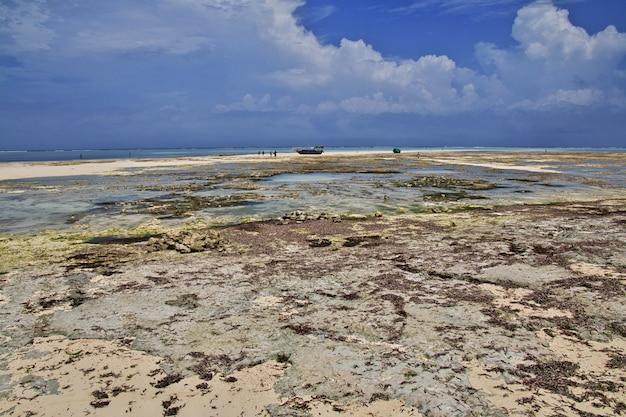 Marée basse à zanzibar, océan indien