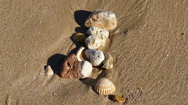 Marées coquille plage de sable décoratif