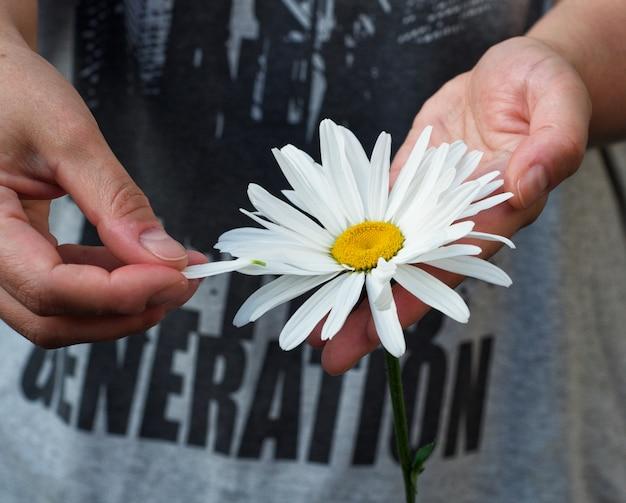 Marguerite blanche dans une main humaine féminine