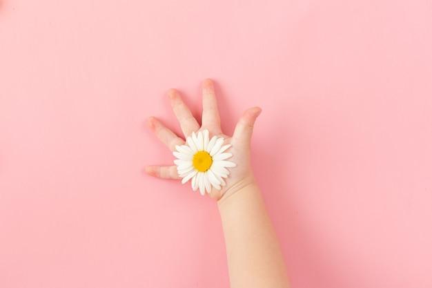 Une marguerite blanche dans les mains d'un enfant sur un fond de papier rose. une marguerite dans les mains des enfants.