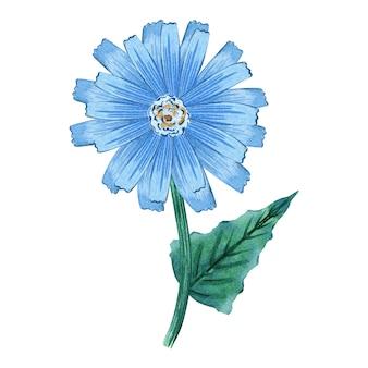 Marguerite bleue aquarelle.