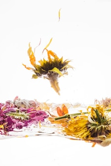 Marguerite jaune tombant dans l'eau