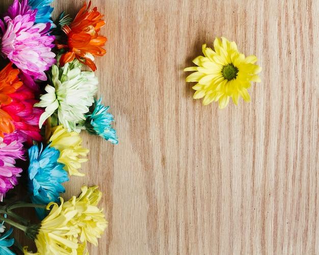 Marguerites colorées vue de dessus avec espace de copie
