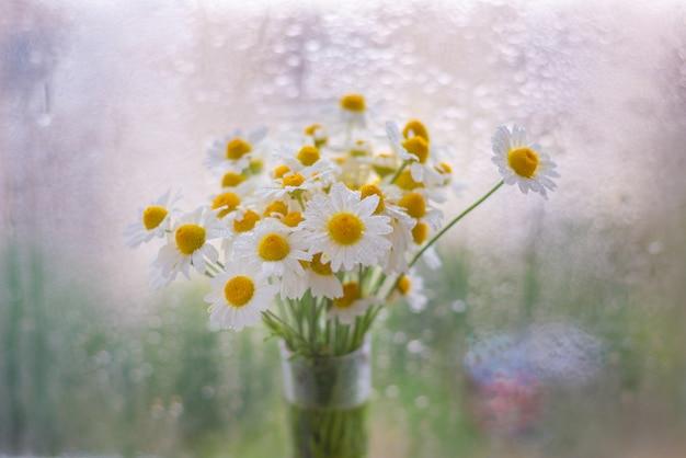 Marguerites dans un vase près de la fenêtre