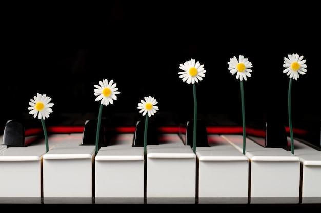 Marguerites entre les touches d'un piano