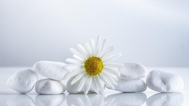 Marguerites de fleurs sur une pyramide de pierres blanches pour le concept de spa ou thé à la camomille.