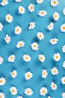 Marguerites sur fond bleu. vue de dessus. fond d'été