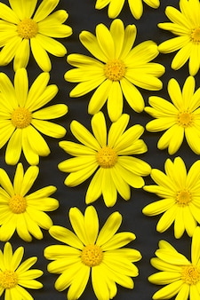 Marguerites jaunes. fleurs, vue de dessus