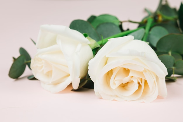 Mariage de roses blanches