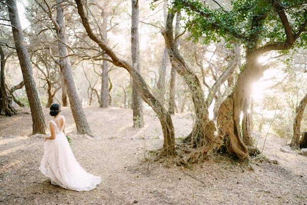 La mariée marche parmi les beaux arbres de l'oliveraie vue arrière