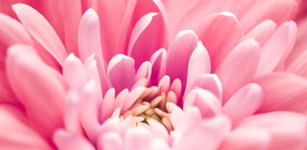 Marque de flore et concept d'amour pétales de fleurs de marguerite de corail en fleurs abstrait art floral fleur fond fleurs au printemps nature pour parfum parfum mariage marque de beauté de luxe conception de vacances