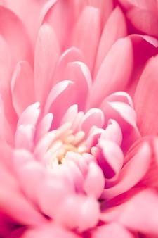 Marque de flore et concept d'amour pétales de fleurs de marguerite de corail en fleurs art abstrait de fleurs florales retour...