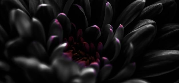 Marque de flore et concept d'amour pétales de fleurs de marguerite noire en fleurs fleurs de fond d'art abstrait fleur florale au printemps nature pour parfum parfum mariage marque de beauté de luxe conception de vacances