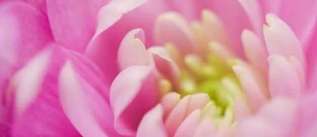 Marque De Flore Et Concept D'amour Pétales De Fleurs De Marguerite Rose En Fleurs Abstrait Art Floral Fleur Backg ... Photo Premium
