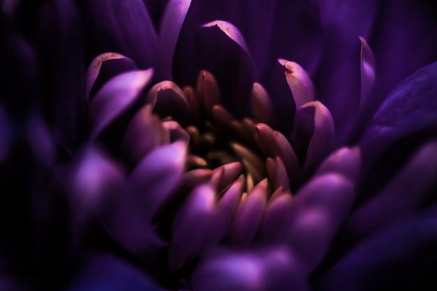 Marque de flore et concept d'amour pétales de fleurs de marguerite violette en fleur abstrait art floral fleur bac ...