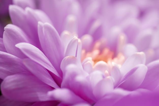 Marque de flore et concept d'amour pétales de fleurs de marguerite violette en fleur fleurs de fond d'art abstrait fleur florale au printemps nature pour parfum parfum mariage marque de beauté de luxe conception de vacances