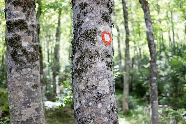 Marque de randonnée peinte sur l'écorce des arbres, panneaux de randonnée, marques de randonnée