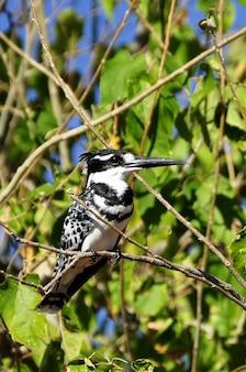 Martin-pêcheur facture nature oiseau route