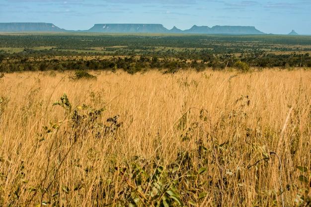 Mateiros, tocantins, brésil: prairie de terres jalapao et grande chaîne de montagnes