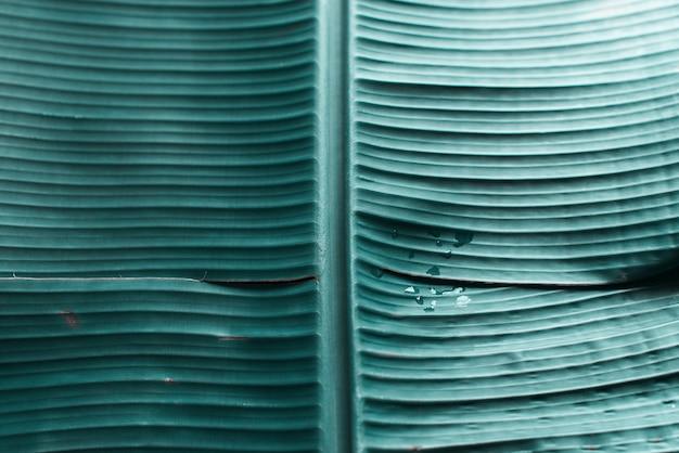 Matériau de vie organique de feuille de palmier tropical turquoise