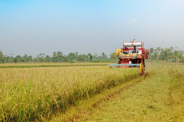 Matériel agricole travaillant à la rizière doré.
