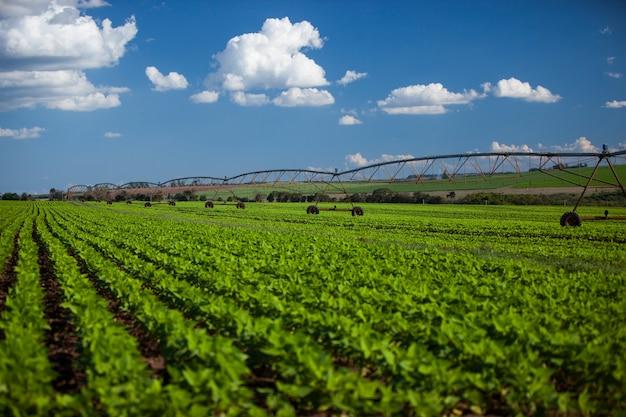 Matériel d'irrigation industrielle sur champ agricole sous un ciel bleu au brésil. agriculture.
