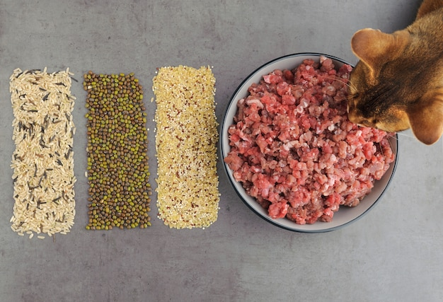Matières premières naturelles pour la nourriture pour animaux de compagnie sur fond gris. lay plat.