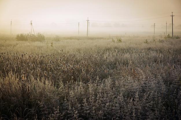 Matin d'automne froid dans les champs