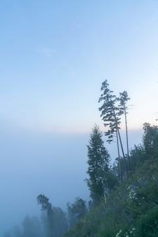 Un matin brumeux dans la forêt de pins d'épinette dans une brume de brouillard sur la colline mystique