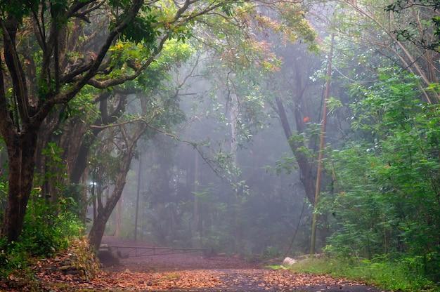 Matin brumeux dans la forêt wanagama, gunung kidul, yogyakarta, indonésie.