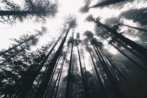 Matin brumeux dans une forêt