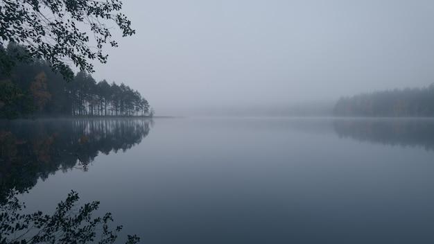 Matin brumeux. lac pittoresque de la forêt.