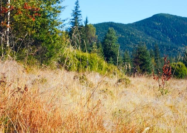 Matin brumeux paysage de montagne d'automne avec des bouleaux et des sapins.