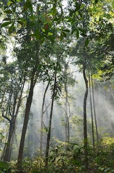 Matin dans la forêt tropicale
