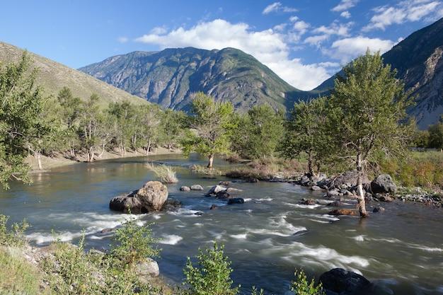 Matin ensoleillé au bord d'une rivière dans les montagnes de l'altaï