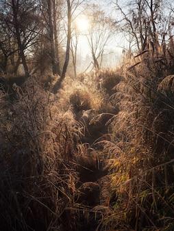 Matin ensoleillé chemin brumeux à travers les hautes herbes.